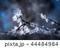 雪 枝 冬の写真 44484984
