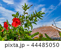屋根 ハイビスカス 竹富島の写真 44485050