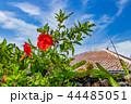 ハイビスカス 竹富島 晴れの写真 44485051