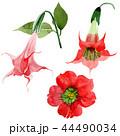 Watercolor red brugmansia flower. Floral botanical flower. Isolated illustration element. 44490034