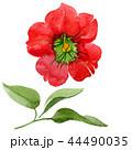 Watercolor red brugmansia flower. Floral botanical flower. Isolated illustration element. 44490035