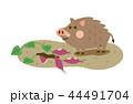 猪 亥 ベクターのイラスト 44491704