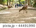 日本 奈良 しかの写真 44491990