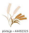 麦の穂のイラスト 44492325