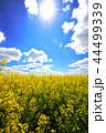 グリーン 緑色 野原の写真 44499339