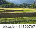 風景 水田 日本の写真 44500707