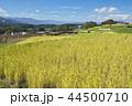 風景 日本 植物の写真 44500710