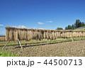 風景 日本 植物の写真 44500713