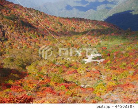 那須岳の秋 那須岳歩道から姥ヶ平の風景 44503387