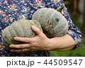 Detail shot of senior hand holding two pumpkins 44509547