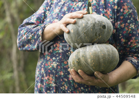 Close-up of hands holding two pumpkins in outdoor 44509548