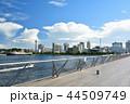 横浜 みなとみらい 大さん橋の写真 44509749