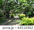 フィジー 観光 ビセイセイ村の風景 パンの木 44510362