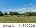 青 畑 青色の写真 44512220