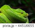 ヘビ 蛇 爬虫類の写真 44516655