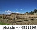 風景 日本 植物の写真 44521396
