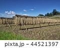 風景 日本 植物の写真 44521397