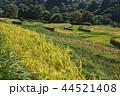 風景 日本 植物の写真 44521408
