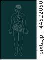 内臓 人体 臓器のイラスト 44522050