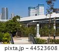 豊洲市場 市場 東京都中央卸売市場の写真 44523608