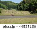 トラクターで田植えに備える田舎の風景 44525160