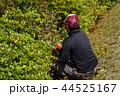 さつきの手入れ作業をする庭師 44525167