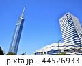 福岡タワー 福岡 晴れの写真 44526933