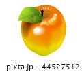 果物 フルーツ 林檎のイラスト 44527512