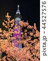 東京スカイツリー 夜桜 河津桜の写真 44527576