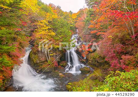 紅葉の奥日光、竜頭の滝 44529290