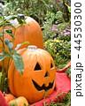 ハローウィン かぼちゃ ハロウィンの写真 44530300
