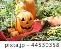 ハローウィン かぼちゃ ハロウィンの写真 44530358