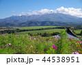 風景 山 秋桜の写真 44538951