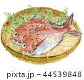 鯛 魚 真鯛のイラスト 44539848