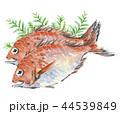 鯛 たい 2尾 ひば 44539849