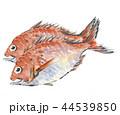 鯛 たい 2尾 44539850