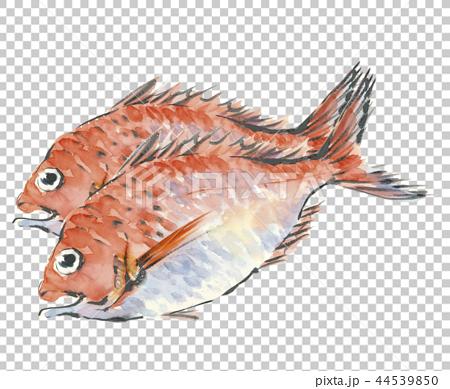 兩條魚 44539850