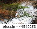 奥日光 湯川 秋の写真 44540253