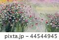 秋桜 コスモス こすもす 秋 花 44544945