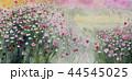 秋桜 コスモス こすもす 秋 花 44545025
