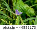 蝶 蝶々 昆虫の写真 44552173