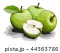 りんご リンゴ 林檎のイラスト 44563786