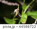 昆虫 虫 虻の写真 44566722