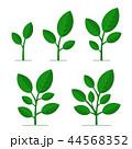 植物 のびる 生えるのイラスト 44568352