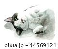 猫 動物 水彩のイラスト 44569121
