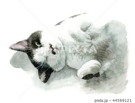 水彩で描いた白と黒の猫 44569121