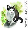 猫 動物 水彩のイラスト 44569122