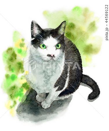 水彩で描いた白と黒の猫 44569122