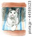 猫 動物 水彩のイラスト 44569123