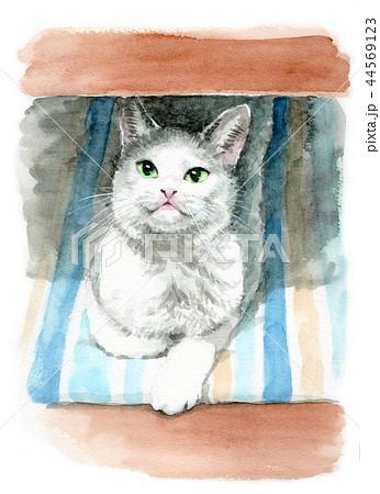 水彩で描いた白とグレーの猫 44569123
